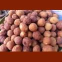 frittierte Mandelbällchen aus Paniermehl, Mandel, Zucker, Eier